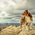 Австралийская овчарка а горах