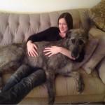 Ирландский волкодав на диване с хозяйкой