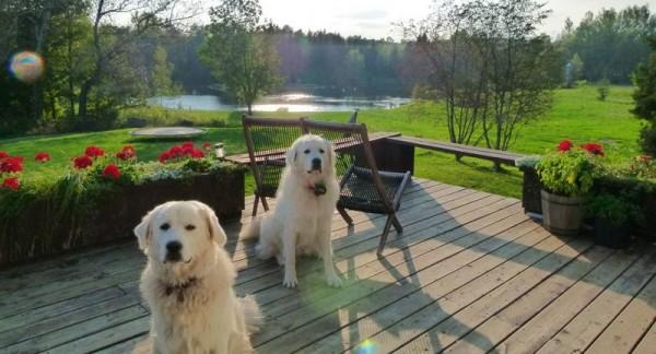 Два Словацких чувача в загородном доме