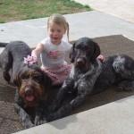 Дратхаары и ребенок