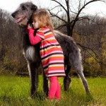 Дирхаунда обнимает девочка