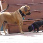 Пагль и щенок